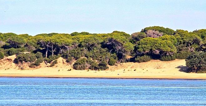 Doñana: el problema no es el fuego, sino el agua